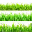 Foto de Stock  : Green grass