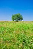 Tree and field — Stock Photo