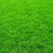 Green grass — Stock Photo #39094165