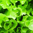 Lettuce — Stock Photo #39094261