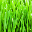 Stock Photo: Green grass