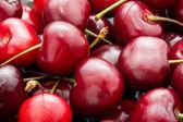 Red cherry — Stockfoto