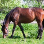 Horse — Stock Photo #39209969