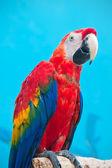 Papuga ara — Zdjęcie stockowe