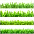 Green grass — Stock Photo #39210063