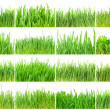 Green grass — Stock Photo #39304751