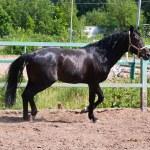 Horse — Stock Photo #39304809