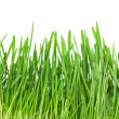 Green grass — Foto de stock #39304999