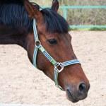 Horse — Stock Photo #39364541