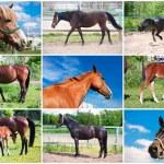 Horse — Stock Photo #39364591