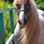 Horse — Stock Photo #39533491