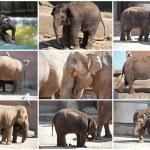 Elephant — Stock Photo #39533625