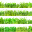 Green grass — Foto de stock #39533665