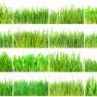 Green grass — Stock Photo #39533665
