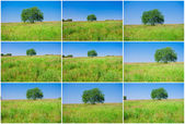 Tree and field — Stock Photo