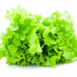Lettuce — Stock Photo #39684691