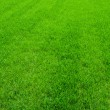 Green grass — Stock Photo #39792815