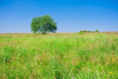 Tree and field — Foto Stock