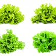 Lettuce — Stock Photo #40147597