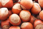 лесных орехов или фундука — Стоковое фото