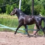 Horse — Stock Photo #40230811
