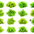 Lettuce — Stock Photo #40230931