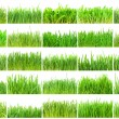 Green grass — Foto de stock #40585867