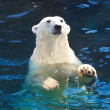 Polar bear — Stock Photo #41089221