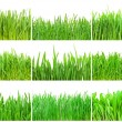 Green grass — Stockfoto #41321819