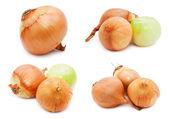 Onion — Stock fotografie