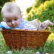 Baby in basket — Stock Photo #12255851