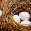 Eggs in nest — Stock Photo #23562589