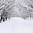 Snow alley in winter forest — Stock Photo