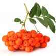 Ashberry with leaves - Stock Photo