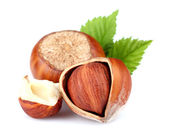Hazelnuts with leaves — Stock Photo