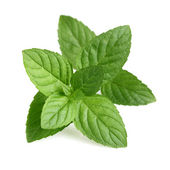 Fresh peppermint — Stock Photo