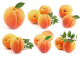 Collage from fresh apricots — Stock Photo