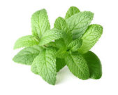 Peppermint in closeup — Stock Photo