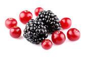 Cranberry with blackberry — Stock Photo