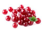 Heap of juicy cranberry — Stock Photo