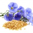 Flax seeds with flowers — Stock Photo #19031071