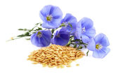 Flax seeds with flowers — Stock Photo