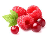 Raspberry with cranberry — Stock Photo