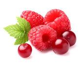 Raspberry with cranberry — Stock Photo