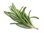 Rosemary spices — Stock Photo