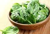 Young spinach — Stock Photo