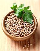 Coriander seeds — Stock Photo