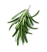 Rosemary spice in closeup — Stock Photo