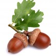 Dried acorn with leaves — Stock Photo