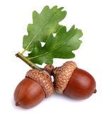 Gedroogde acorn met bladeren — Stockfoto